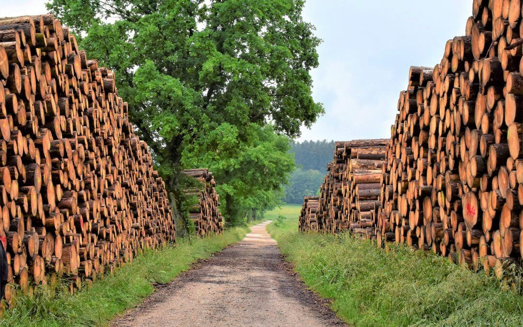 Five large stacks of timber along a gravel path, used to represent the timber as a natural product.